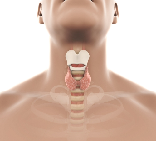 IntegratedENT - Thyroid Gland